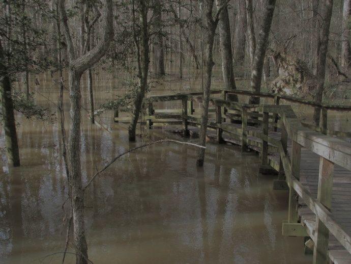 Congaree flooding