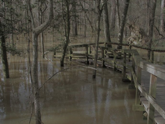 Congaree flooding