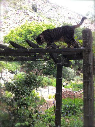 tassajara garden cat