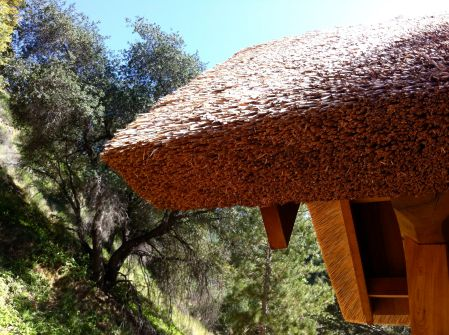 tassajara gate roof and tree