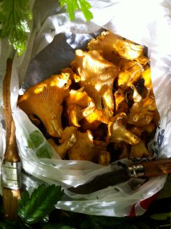foraged chanterelles
