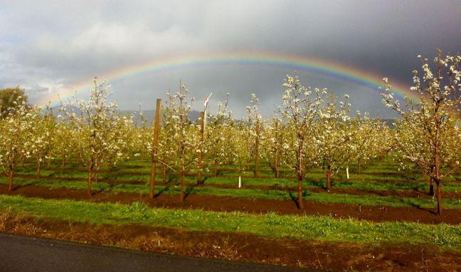 silver lining rainbow