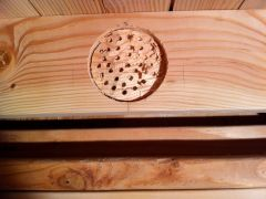 I then chiseled until just the bottom of the drill holes were visible. Here it is in progress...